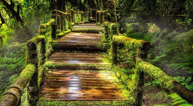 Guld och gröna skogar