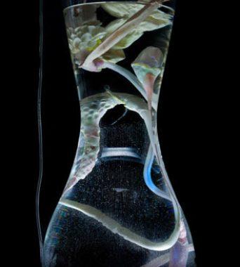 »petrogestativesystem«: Verdauungssystem für die Kunststoff-Metabolisierung | <i>digestiv system for metabolizing plastic</i>