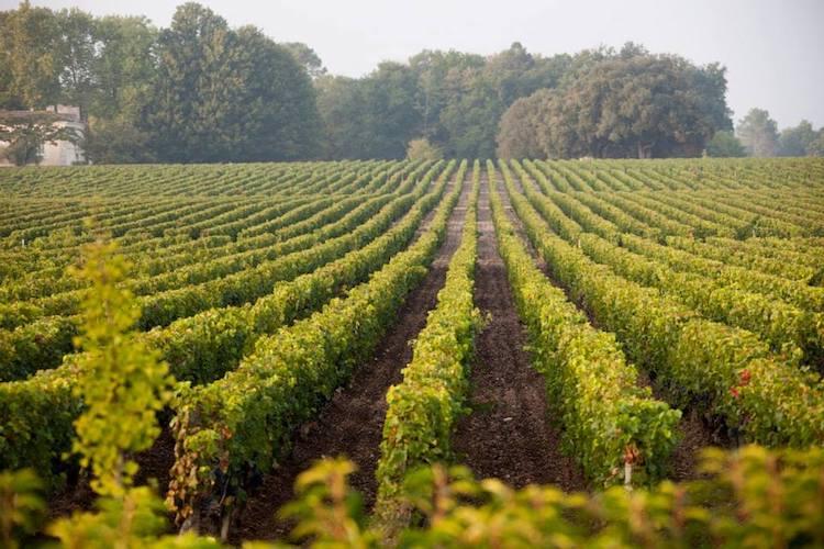 Resultado de imagen de foto de viñedos de caudalie
