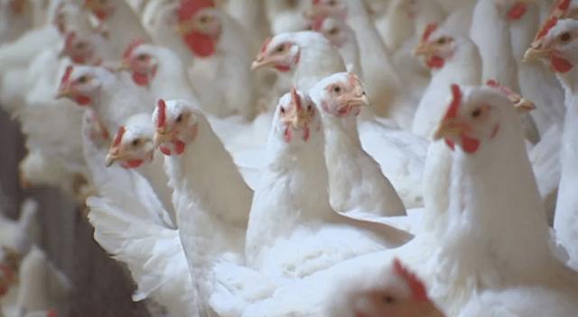 Rusia informa el primer caso mundial de la gripe aviar H5N8 en humanos