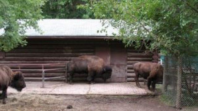 Riverdale Farm y High Park Zoo abren este fin de semana