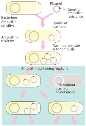 Transformation by plasmids