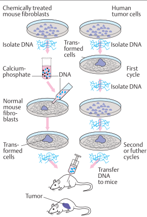 Transfection by DNA
