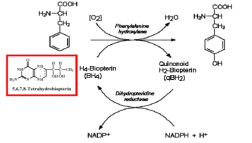 hydroxylation de la Phe en Tyr