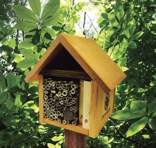 Bee Lodges-A Beginner's Guide to Beekeeping