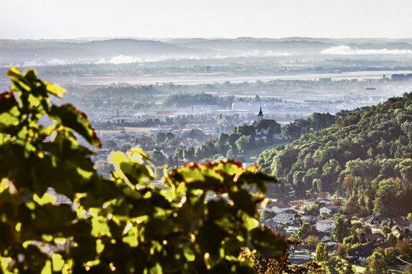 Grazer Stadtwein | Foto: Flora P.