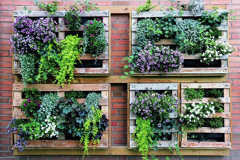 Eins, zwei, grüne Wand! Foto: shutterstock