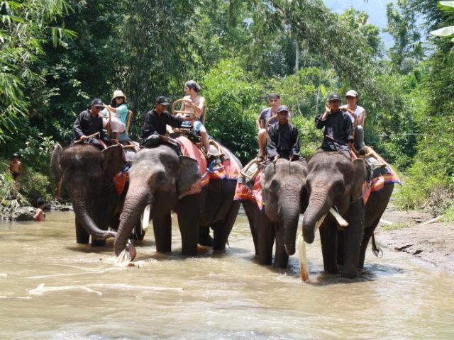 wisata gajah seru borobudur
