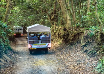 We piled into these 4x4 jeeps and explored St Kitts. We're just entering the rain forest.