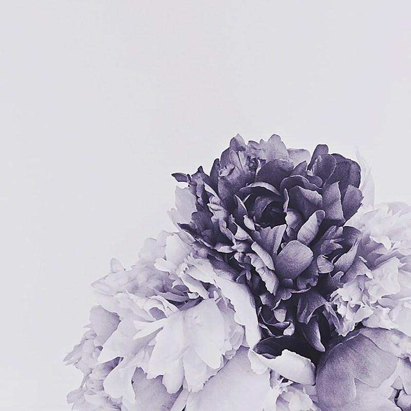 peonies black & white