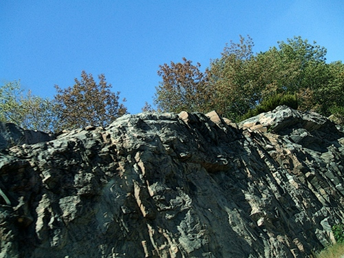 July 2012 Muskoka Drought: Trees are dying where there is a thin layer of solid over bedrock.