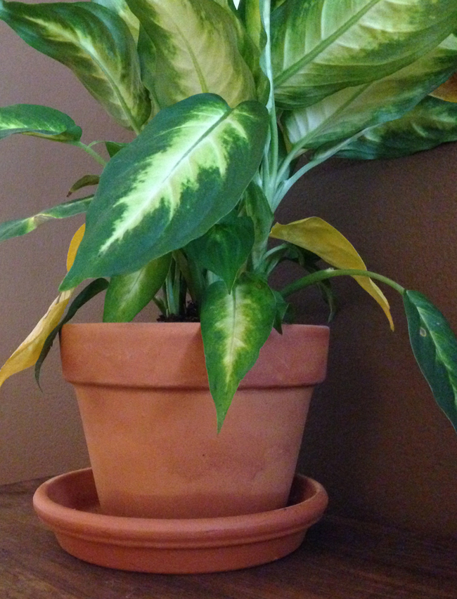 leafy houseplant maggie whitley