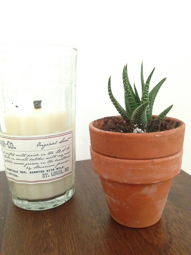 candle succulent maggie whitley