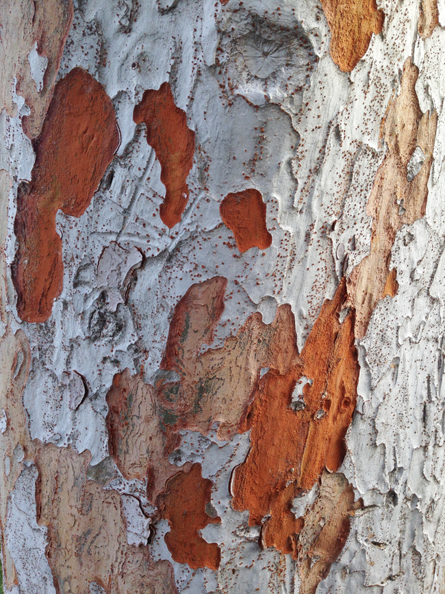 tree bark maggie whitley