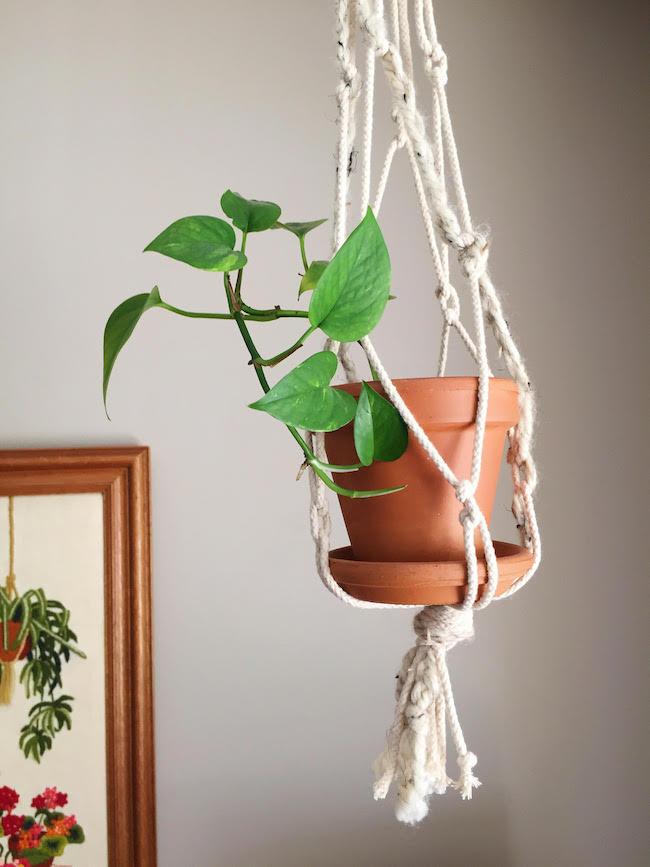 macreme plant maggie whitley