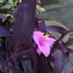 【花便り】むらさき御殿