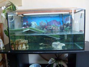 Blog de magicmanu :Aménagement de notre maison, L'aquarium de Minette