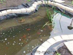 Blog de magicmanu :Aménagement de notre maison, Bassin de jardin - plantations