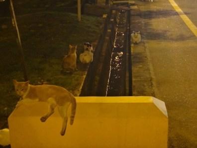 stray cats in Melaka