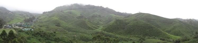 Boh Tea Plantation Panorama