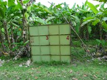 Monkey Cages in Banana Fields - we were assured they were set free