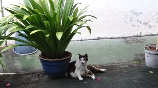 One of the many well loved and looked after cats at Shirin Guesthouse