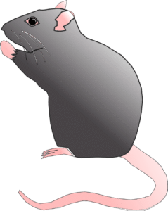 Feng shui et horoscope chinois : le rat