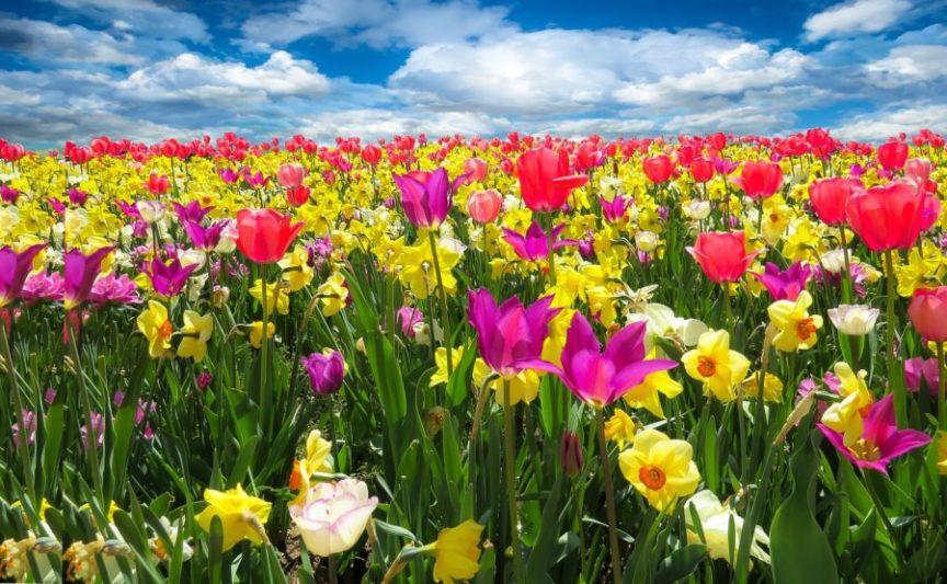 Magie des fleurs au début du printemps