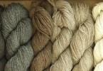 I colori naturali della lana Shetland