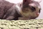 Sottogatto Veruska regali per gatti e cani