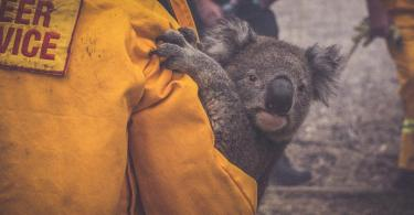 Australian Bushfires emergenza incendi Australia