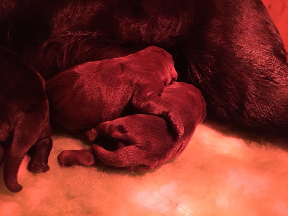 Sono nati i cuccioli della cucciolata B