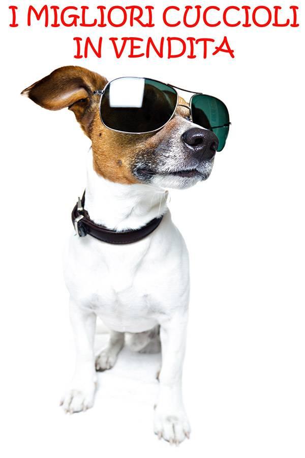Vendita di cani di razza, ma senza pedigree... le sanzioni.