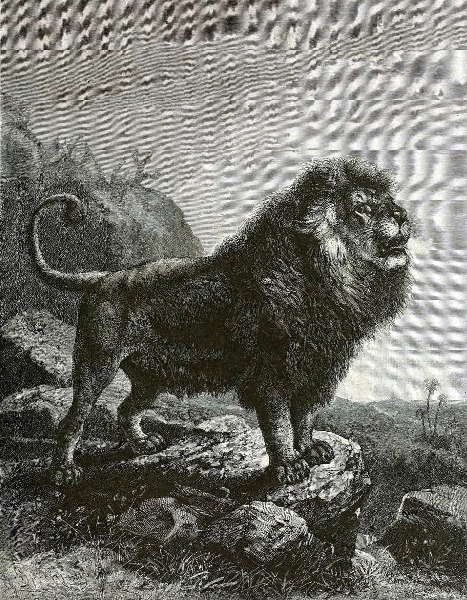 leones archivos - Magnética 107.1 FM