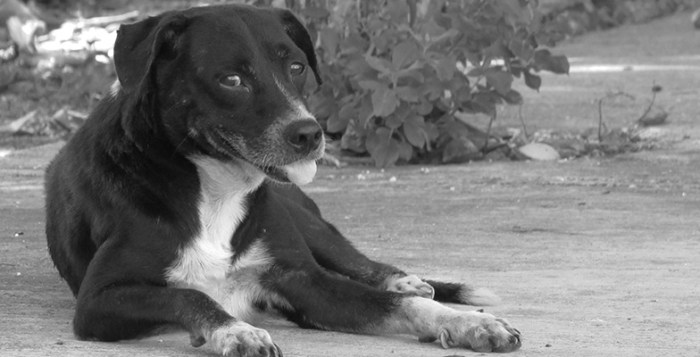 Perro Callejero. Fotografía de David Gómez.