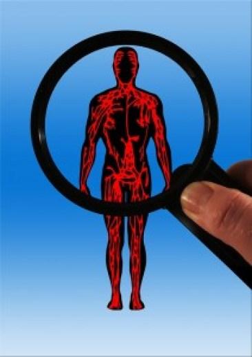 corps et circulation