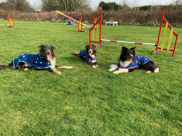 Agility Dogs wearing their magnetic coats