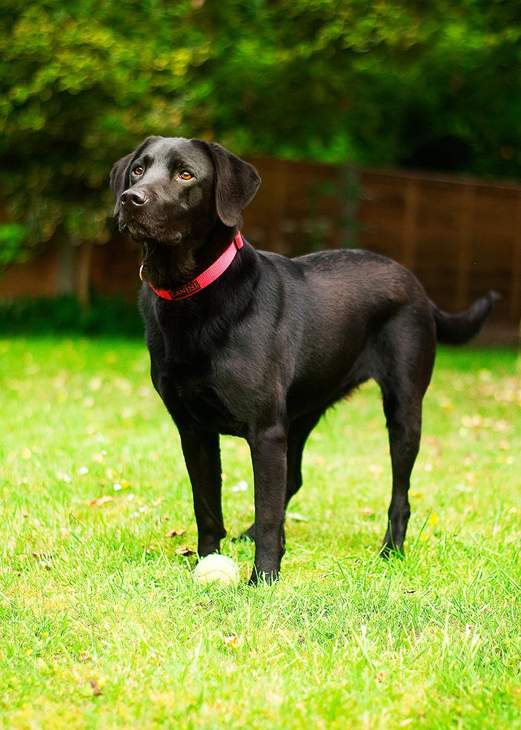 Casey wearing her red Magnetix dog collar