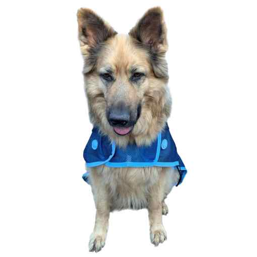 Magnetix Therapy dog coat chest expander
