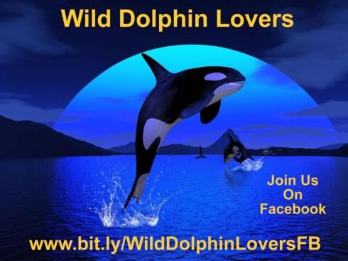 WildDolphinLoversSm