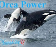 The Power of Orca Dolphin Healing Energy