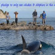 Pledge to Only See Dolphins and Whales in the Wild