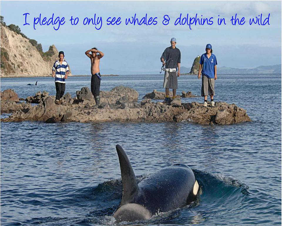 Pledge to Only See Wild Dolphins and Whales in their Natural Habitat