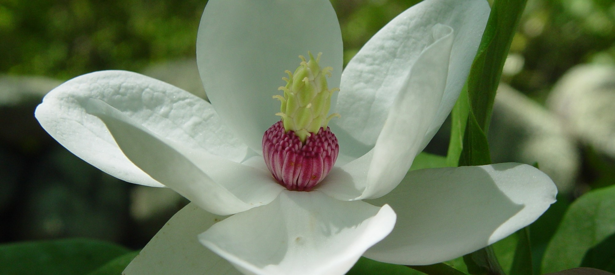 hight resolution of getting started with magnolias