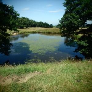 Darcy Lake