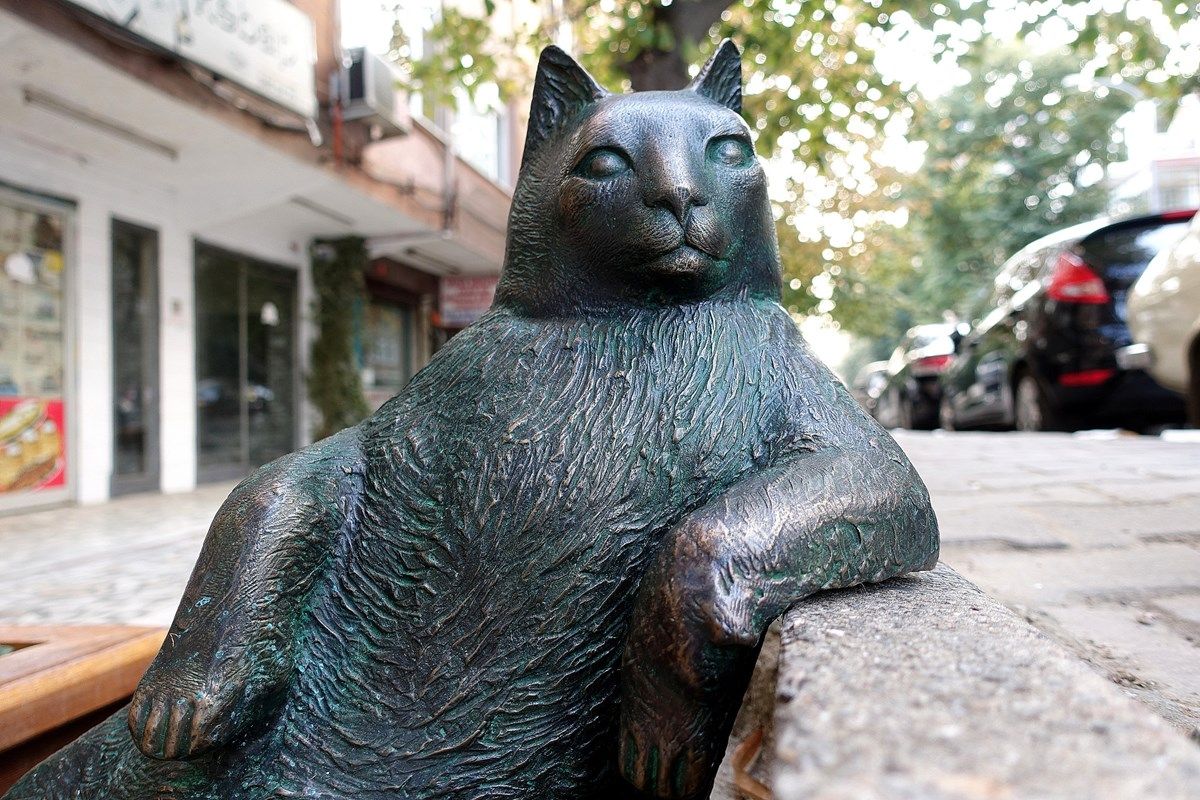 Tombili o gato de Istambul que virou meme ganhou uma esttua