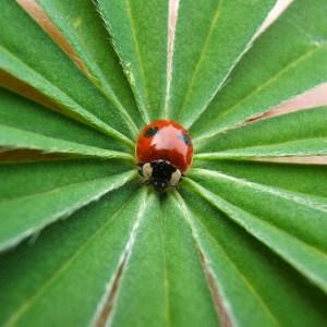 an-ladybug