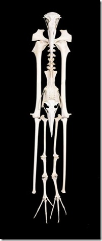 Bone Show - Bird Man (Medium)