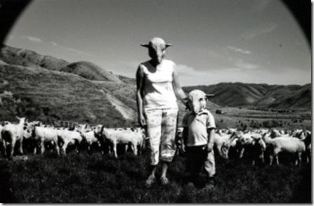 Sheep Farm(com)