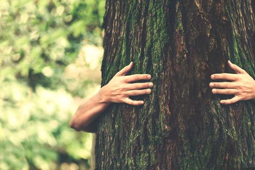 Contacto con la naturaleza para tu recuperación, reconexión y sanación